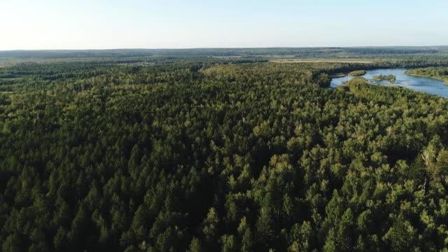obere ansicht von grünen wäldern und teich bei sonnigem wetter - sonnenbarsch stock-videos und b-roll-filmmaterial