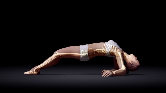 Upward Facing Pose Of Stretching Young Female With Visible Skeleton video