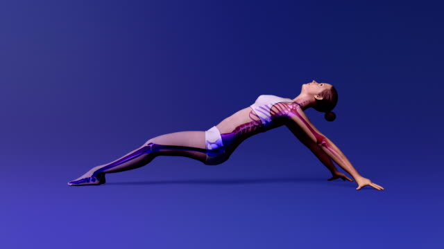 Upward Plank Pose Of Stretching Young Female With Visible Skeleton video