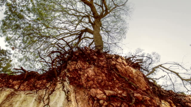 upward shot of cliff exposing tree roots - sottosuolo video stock e b–roll