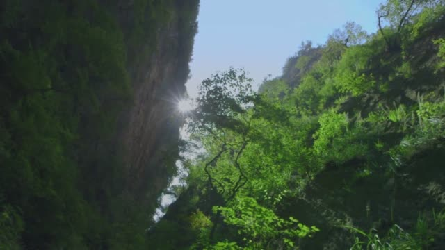 Upward view of beautiful forest trees in sun rays with bird calls in the background.  Looking up at circle of tall green trees with cliff in the forest. Green canyon with steep rock cliffs. natural condition stock videos & royalty-free footage