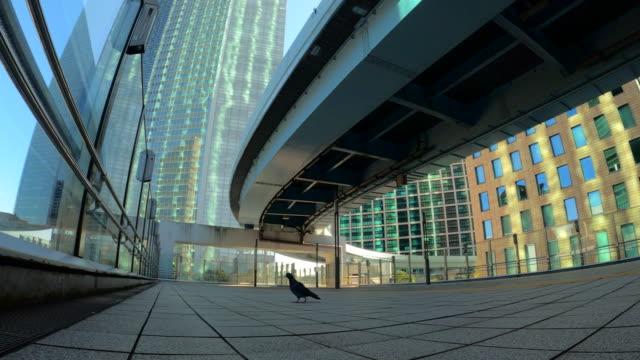 stockvideo's en b-roll-footage met stedelijk stadsgezicht/duif - financieel district