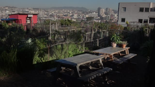 urbane community garden - urban gardening stock-videos und b-roll-filmmaterial