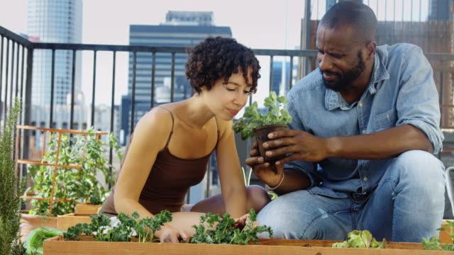 städtische gärtner genießen pflanzliche duft - dachgarten videos stock-videos und b-roll-filmmaterial