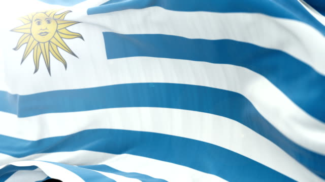 uruguay flag slow waving background. 4k close up flag waving. seamless loop - politica e governo video stock e b–roll