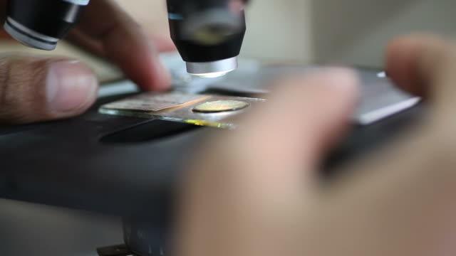vidéos et rushes de à l'aide de microscope - étudiant(e)