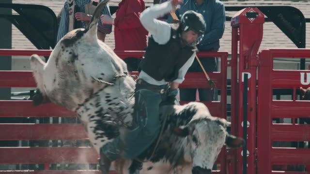 utah bull riding rodeo - irriducibilità video stock e b–roll