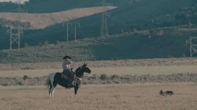 Utah cowboy riding in the field