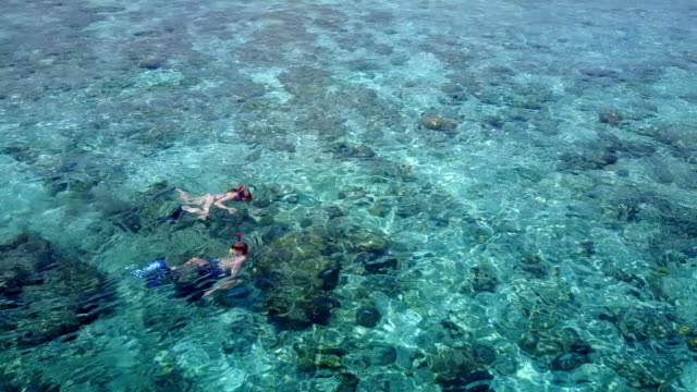 v04061 Aerial flying drone view of Maldives white sandy beach 2 people young couple man woman snorkeling swimming diving on sunny tropical paradise island with aqua blue sky sea water ocean 4k video