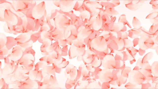 vídeos y material grabado en eventos de stock de corazón de san valentín - pétalo
