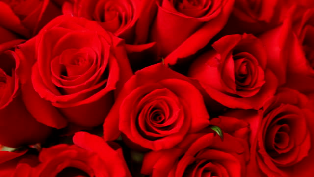 valentine's day roses, closeup - valentines day stock videos and b-roll footage