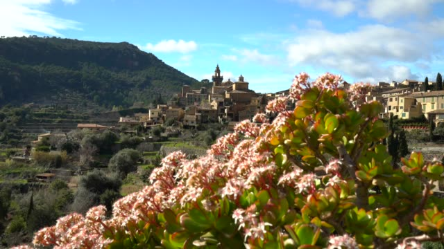 花を持つ valldemosa マリョルカ - ヴァルデモサ点の映像素材/bロール