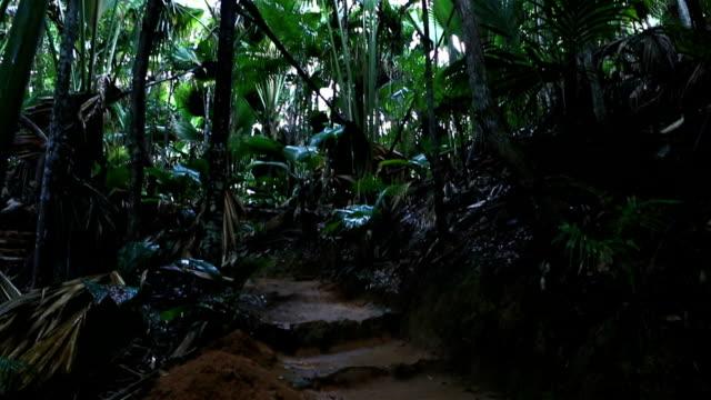 Vallee De Mai palm forest in Praslin Vallee de Mai Nature Reserve in Praslin. Seychelles. indian ocean islands stock videos & royalty-free footage