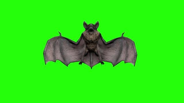vídeos de stock e filmes b-roll de vampire bat flying and attacking in a green screen. halloween concept. - apocalipse