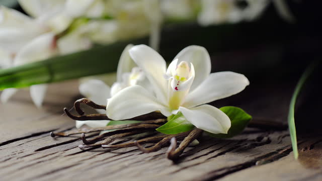 Vanilla flower with vanilla sticks are on the old wooden board, men's hand puts another flower. Vanilla orchid is behind.