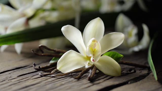 Vanilla flower with vanilla sticks are on the old wooden board, men's hand puts another stick. Vanilla orchid is behind.