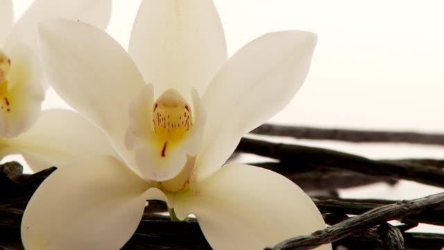 vidéos et rushes de vanille à proximité - vanille
