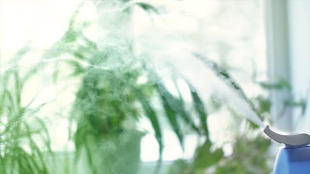 窓と緑の植物の前に加湿器からの蒸気 - 加湿器点の映像素材/bロール