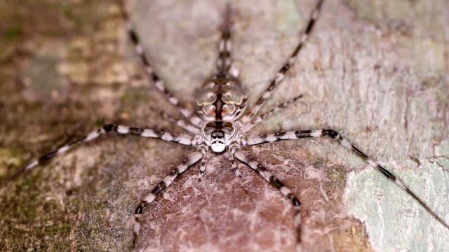 多彩なクモの足を木の幹に伸ばして - こっそり点の映像素材/bロール