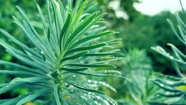 Kaktüsler büyüyen doğa üzerinde çeşitli. video