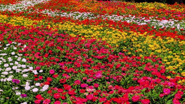 晴れた日には色々な花のカラフルなフィールド。 - 花壇点の映像素材/bロール