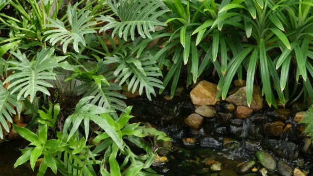 Various green tropical plants growing near small creek with fresh water on sunny day in amazing garden. Bright juicy exotic tropical jungle leaves texture backdrop, copyspace. Lush foliage.