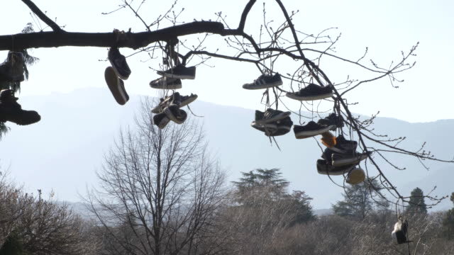 various shoes hanging from a tree. blue sky on the background on sunny day. public park in bolzano, italy. trentino - sprzęt do ćwiczeń filmów i materiałów b-roll