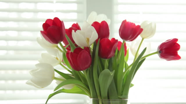 Vase of tulips video