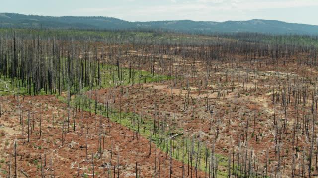 カリフォルニアの山火事の後の広大な焼失地域 - ドローンショット - 残骸点の映像素材/bロール