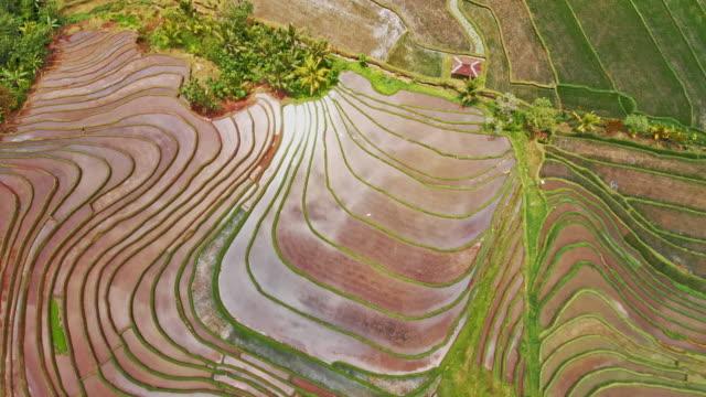 vast rice fields in jatiluwih - taras ryżowy filmów i materiałów b-roll