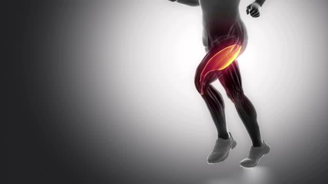 vastus lateralis Bein Muskeln Anatomie-animation – Video