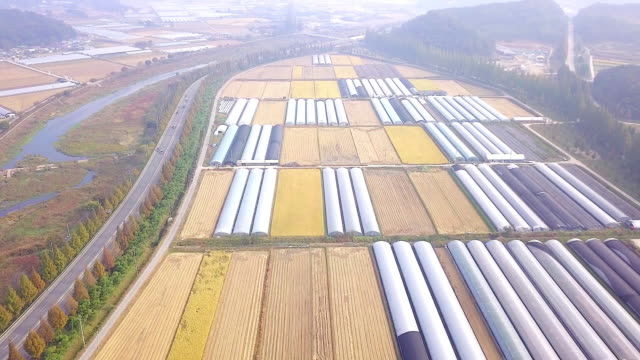 Vegetable garden in Korea video