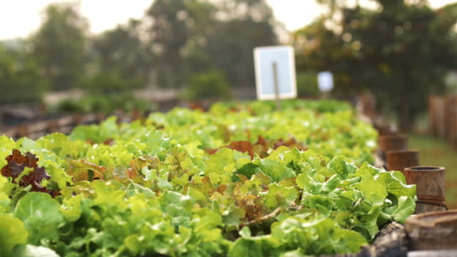 Vegetable garden video