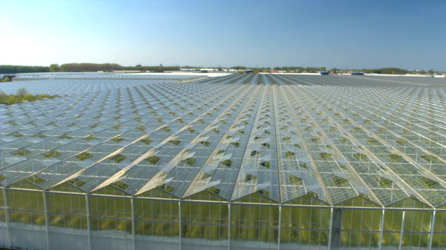 CLOSE UP: Vegetables growing in beautiful modern horticultural glasshouses video