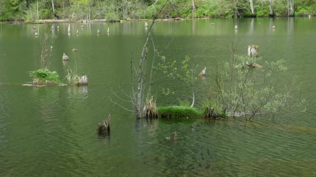 vegetation in see wasser - rohrblattinstrument stock-videos und b-roll-filmmaterial
