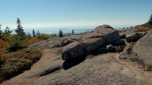 CLOSE UP Vegetation on rocky granite mountaintop Mount Desert Island, Maine, USA video