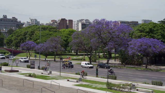 Vehicles and people passing by on beautiful city street with purple trees