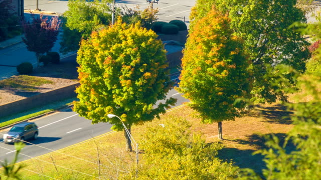 Vehicles Passing Autumn Colored Trees in Downtown Asheville, NC video