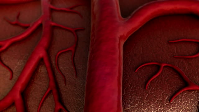 vein, human vein circulatory system, Capillary, Cardio-vascular animal body stock videos & royalty-free footage