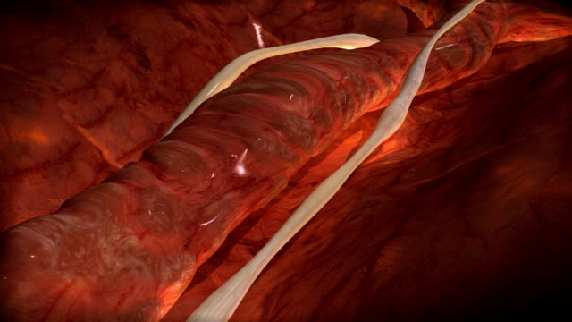 vidéos et rushes de veine - nervure