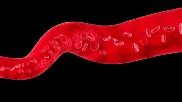 Veins with flowing Blood Cells. Loop-able. HD 1080. video