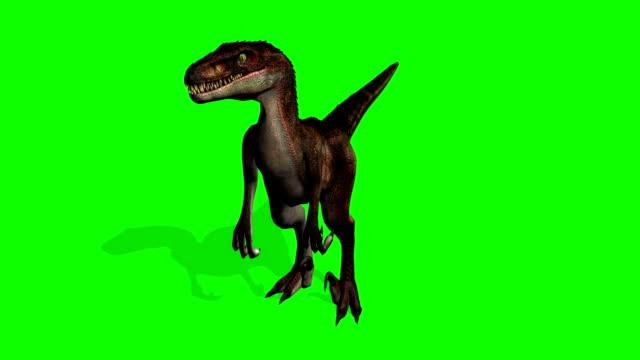 Velocirapor dinossauros na tela em movimento - verde - vídeo