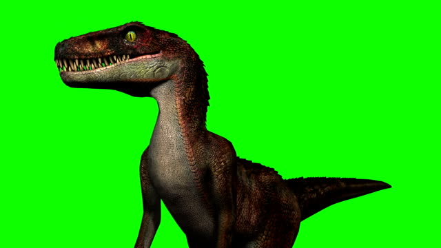 velocirapor dinosaurs in motion - green screen - dinosaur stock videos and b-roll footage