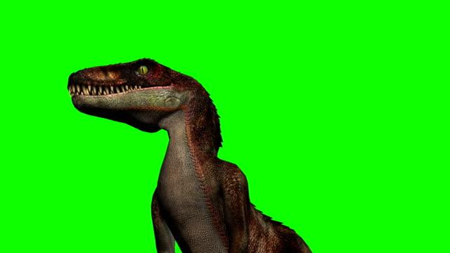 velocirapor dinosaurier ryter - grön skärm - dinosaurie bildbanksvideor och videomaterial från bakom kulisserna