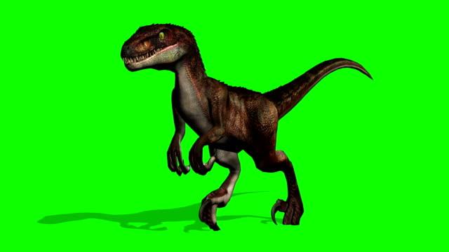 velociraptor dinosaurs runs - green screen - dinosaur stock videos and b-roll footage