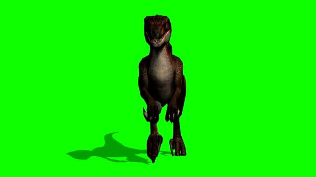 velociraptor dinosaurier kör - grön skärm - tyrannosaurus rex bildbanksvideor och videomaterial från bakom kulisserna