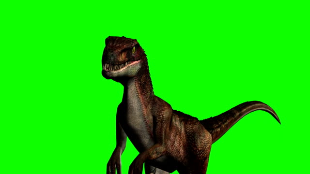 Os dinossauros Velociraptor corre - tela verde - vídeo