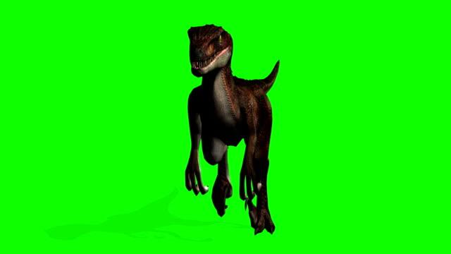 velociraptor dinosaurs walks - green screen - dinosaur stock videos and b-roll footage
