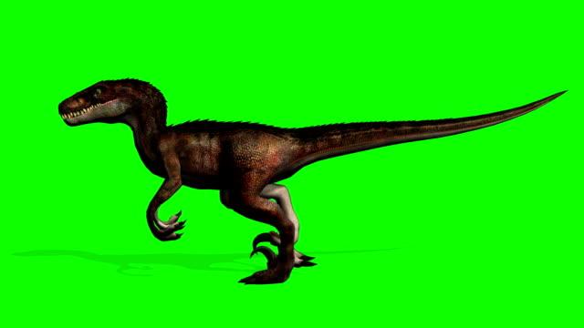 velociraptor dinosaurier promenader - grön skärm - dinosaurie bildbanksvideor och videomaterial från bakom kulisserna