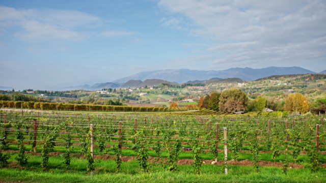 0032 Veneto Vineyard Time Lapse 4K video